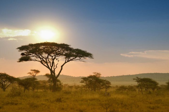 3 Days Ngorongoro &Tarangire