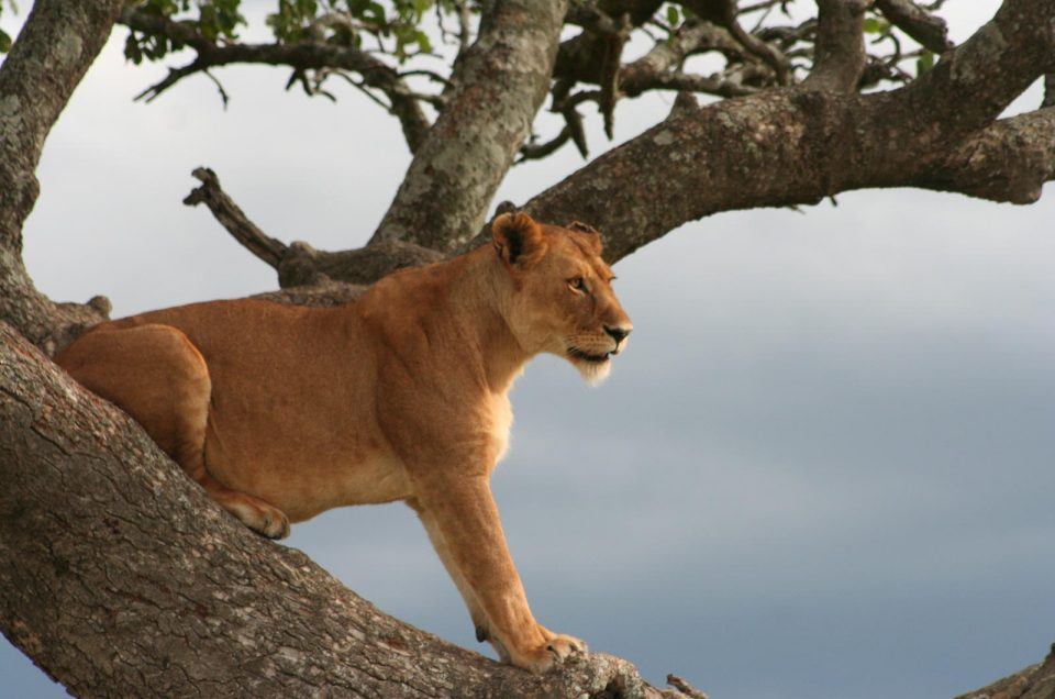 When is the best safari season to visit Tanzania?